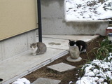 猫の夫婦(仲はイマイチ)