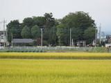 神社と田んぼ