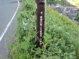 青海川駅までの近道