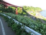 国道8号線の橋と青海川駅の中間位?
