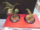 パッと見植物の植木