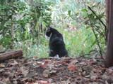 稲荷山のネコ