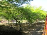 所々にある職員手植えの植林地