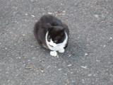 ちょっとブレたネコ