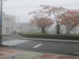 2日連続濃霧って初です