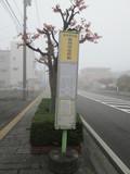 一般路線バスの奥州市役所前バス停