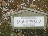 植物季節観測標本by岡山気象台