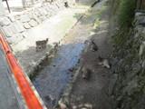 小川と鹿の群れ