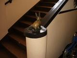 階段のウサギさん
