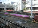阪急梅田駅構内の花壇