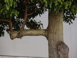 リスが木の上にいます