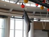 イルカの大ジャンプ